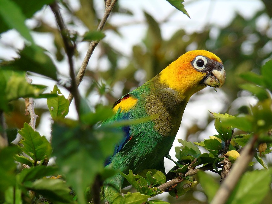 bird_watching_colombia_tourism