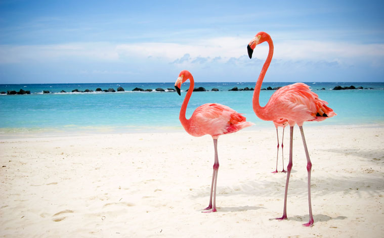 flamingos-guajira-tourism-colombia