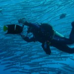 malpelo-dive-adventure-activities-colombia