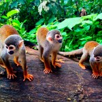 monkey_island_amazon_region_colombia