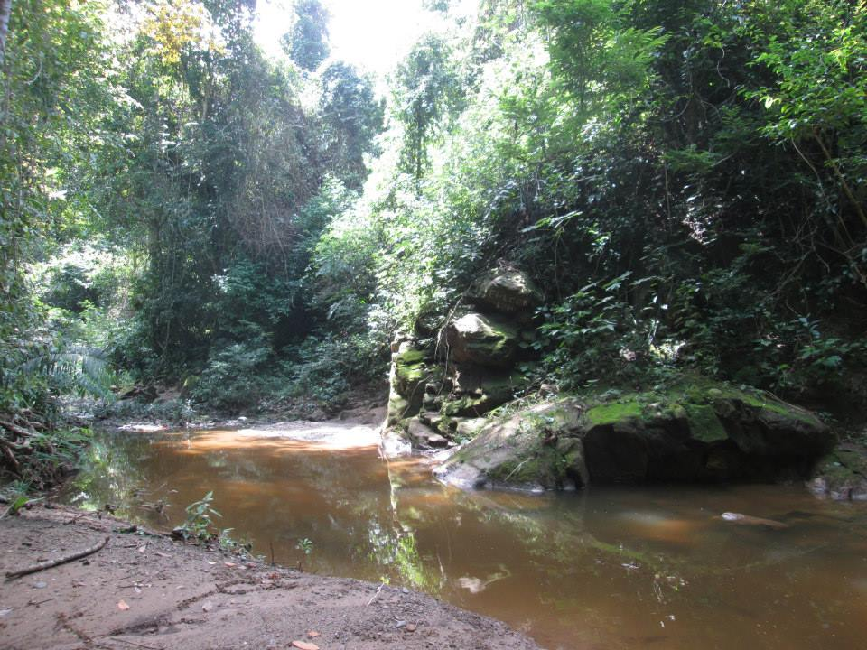 The Park's main ecosystems are the rainforest, the riverine forest and, above all, the tropical dry forest