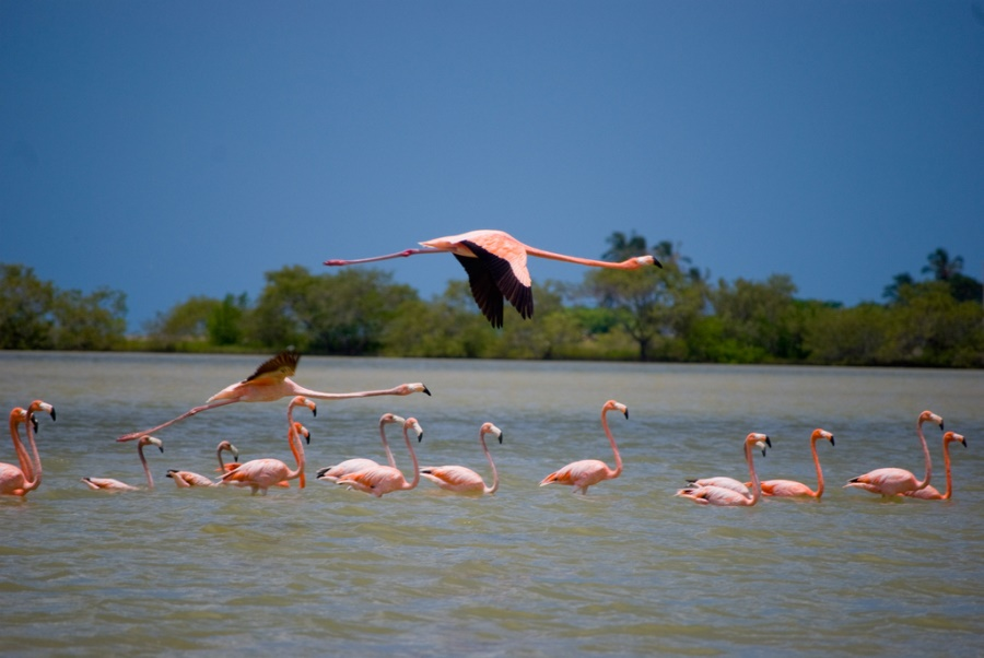 Los Flamencos Sanctuary is located in the Guajira Peninsula of Colombia's Caribbean Region
