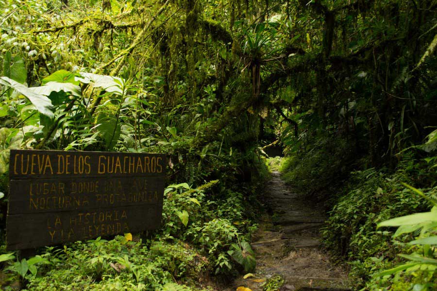Trail to The Guacharos Cave National Natural Park
