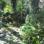 ibague_jardin_botanico_von_humboldt_colombia_travel