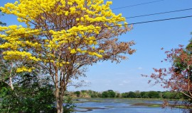 Arauca Travel Guide & Adventure